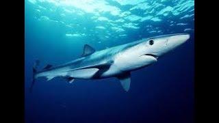 Систематика рыб. Биология 7 класс