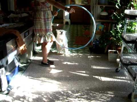 Suki Jumps through hoops!