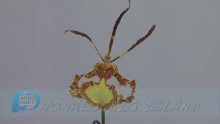 Kona Daifukuji Orchid Club