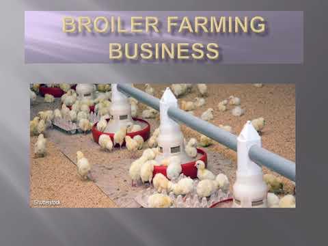BROILER FARMING BUSINESS II SMALL SCALE FARMING