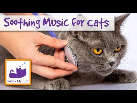Help your Cat Feel Better with Music - Soothing and Healing Music for Cats