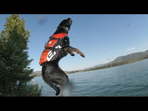 The DFD - Dog Flotation Device