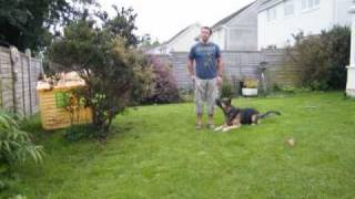 Clicking With A German Shepherd/ Www.taketheleadtraining.co.uk