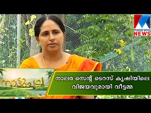 Jessi james success story in terrace farming manorama for Terrace krishi