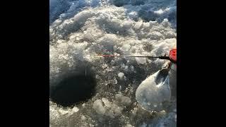 Рыбалка на красивом озере Shorts