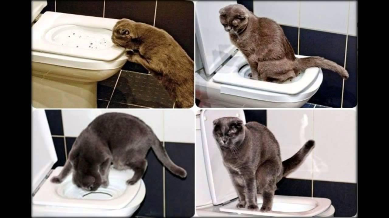 инструкция по использования кошачьего лотка