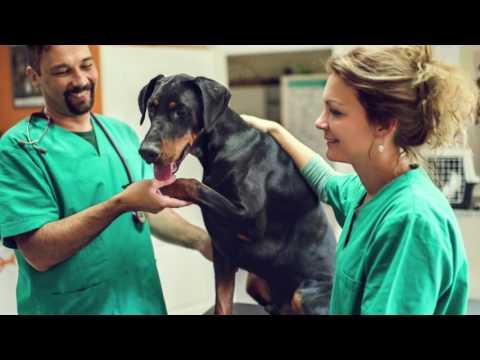 Berlin Township Animal Hospital