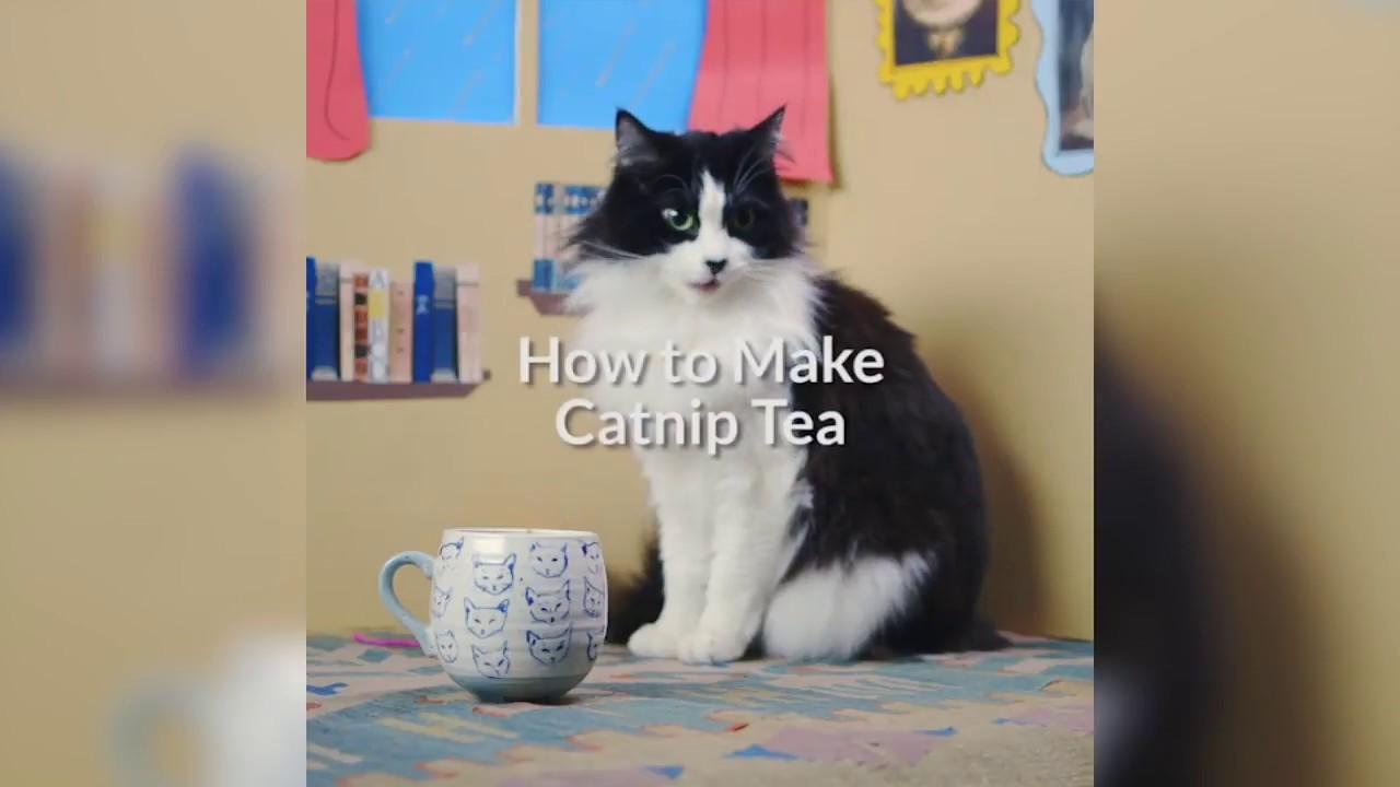 How To Make Catnip Tea Cuteness Com Youtube