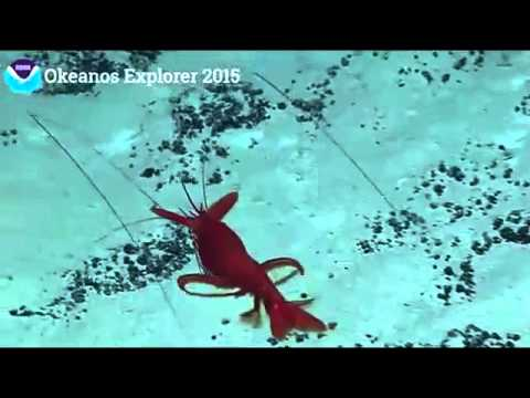 NOAA Ocean Explorer in Hawaii  Johnston Atoll part 25