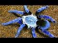 أخطر عشرة عناكب في العالم