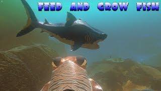 Съел Большой Кусок Форели! Легко прокачали Акулу! Эволюция рыб, FEED AND GROW FISH