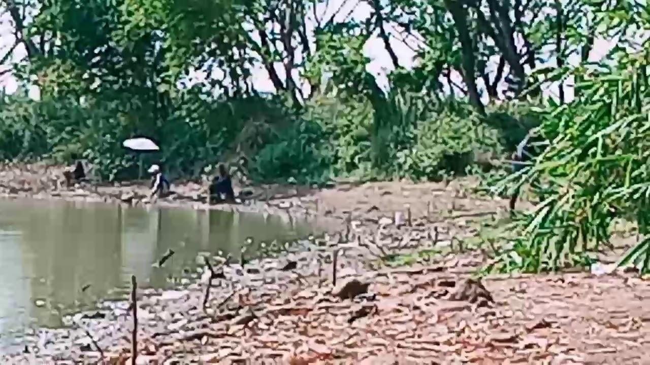 Umpan Mancing Ikan Nila Di Rawa