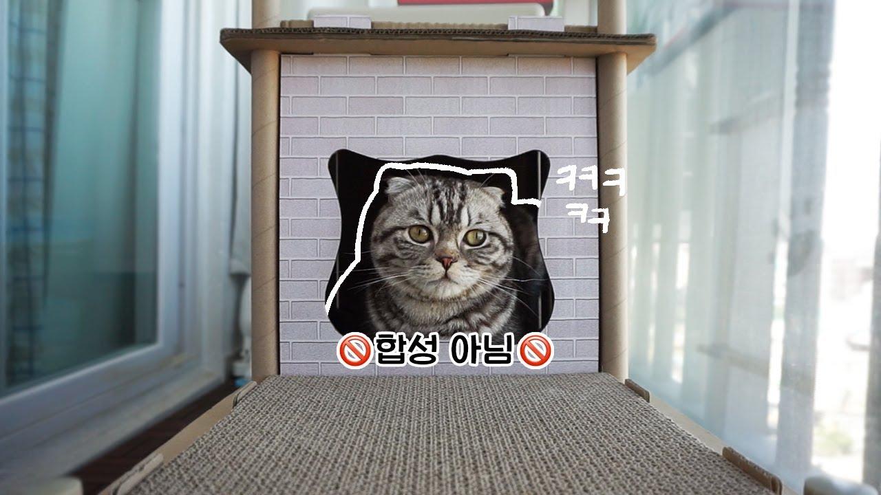 고양이의 귀여운 베란다 라이프 | 냥Vlog
