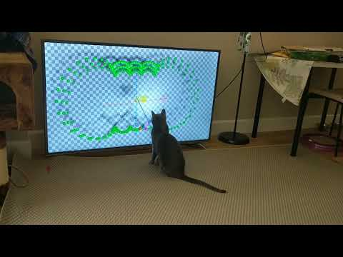 Russian Blue Lena is fascinated by physics video