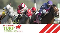 2019 Woodbine Turf Endurance Series #3: Woodbine, September 21, 2019 - Race 8