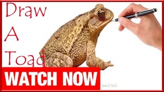 How To Draw A Toad - Learn To Draw - Art Space