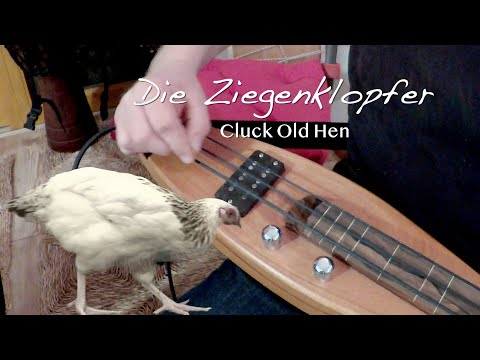 Cluck old hen .  Die Ziegenklopfer at the Dulcimershop
