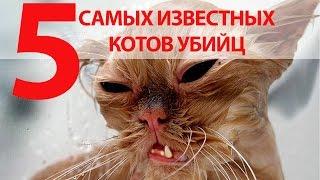 5 самых известных котов убийц