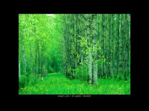Tohumlar Fidana , Fidanlar Ağaca