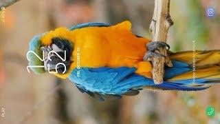 3D Birds Live Wallpaper screenshot 5