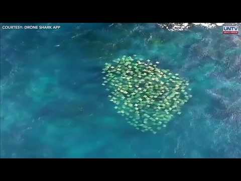 Unbelievable Footage Of A Massive School Of Stingrays In Australia