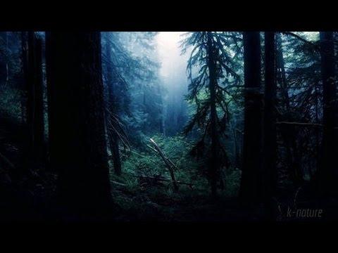 FORÊT LA NUIT – Grillons Pluie Hiboux Vent dans les Branches – Étude Sommeil Détente 🎧 100% RELAX