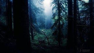 Download FORÊT LA NUIT ☯ Grillons Pluie Hiboux Vent Dans les Branches - Etude Sommeil Détente 🎧 100% RELAX MP3 song and Music Video