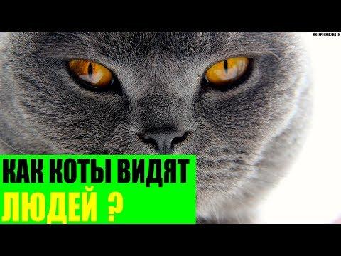 Вопрос: Как вы думаете умеют ли коты гордиться?