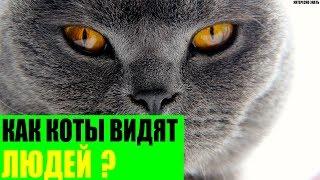Как коты видят людей?