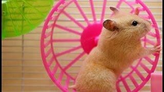 Как сделать бесшумное беговое колесо для хомяка своими руками