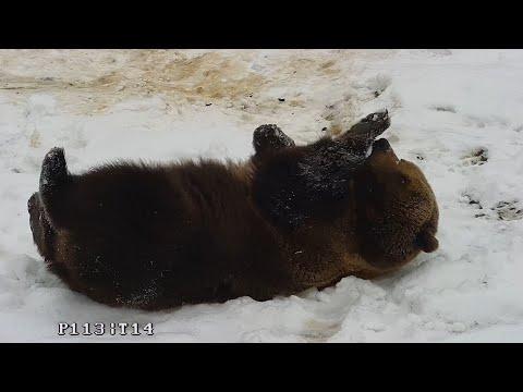 Видео: Как из белого снега сделать бурый?