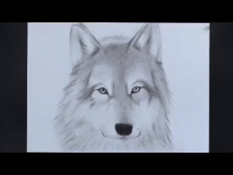 comment dessiner un loup youtube. Black Bedroom Furniture Sets. Home Design Ideas