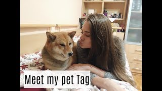 I GOT AN ITALIAN GREYHOUND & Meet My Pet Tag