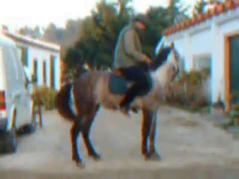 Ensinando cavalo a ladear á 20 anos atrás