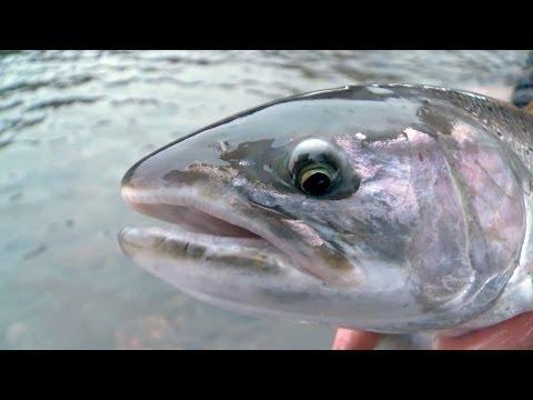 Float Fishing for Massive Winter Steelhead-Tangled with Captain Quinn