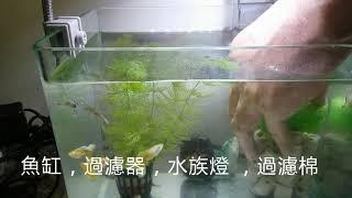 養魚先養水,製作簡單的過濾組合培養硝化菌