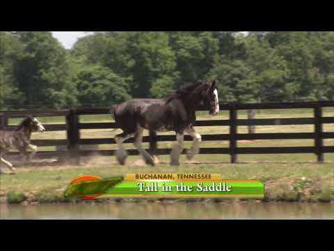 Tennessee Clydesdale Horse Ranch - America's Heartland