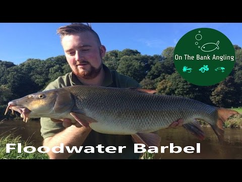 Barbel Fishing On The River Wye - Floodwater Fishing