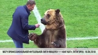 """""""هذه الدبة ستفتتح مباريات كأس العالم""""... دب يظهر خلال مباراة كرة قدم في روسيا (فيديو)"""