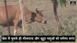 Video झटका मशीन: खेत में घुसते ही नीलगाय और छुट्टा पशुओं को लगेगा करंट download MP3, 3GP, MP4, WEBM, AVI, FLV September 2018