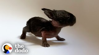 This Is The Tiniest Baby Bunny In The World | The Dodo Little But Fierce