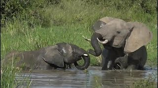 SafariLive July 09 - Elephants have fun in the pool !