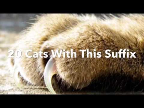 Top Ten Most Common Warrior Cat Name Suffixes