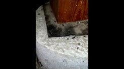Rodent exterminators for mice extermination by rat exterminators