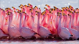 Удивительные снимки птиц. Интересные факты из жизни наших пернатых друзей
