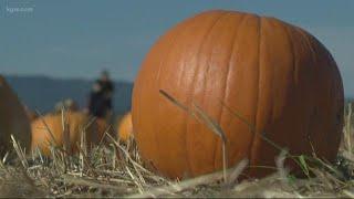 Agri-tourism big draw for pumpkin farms