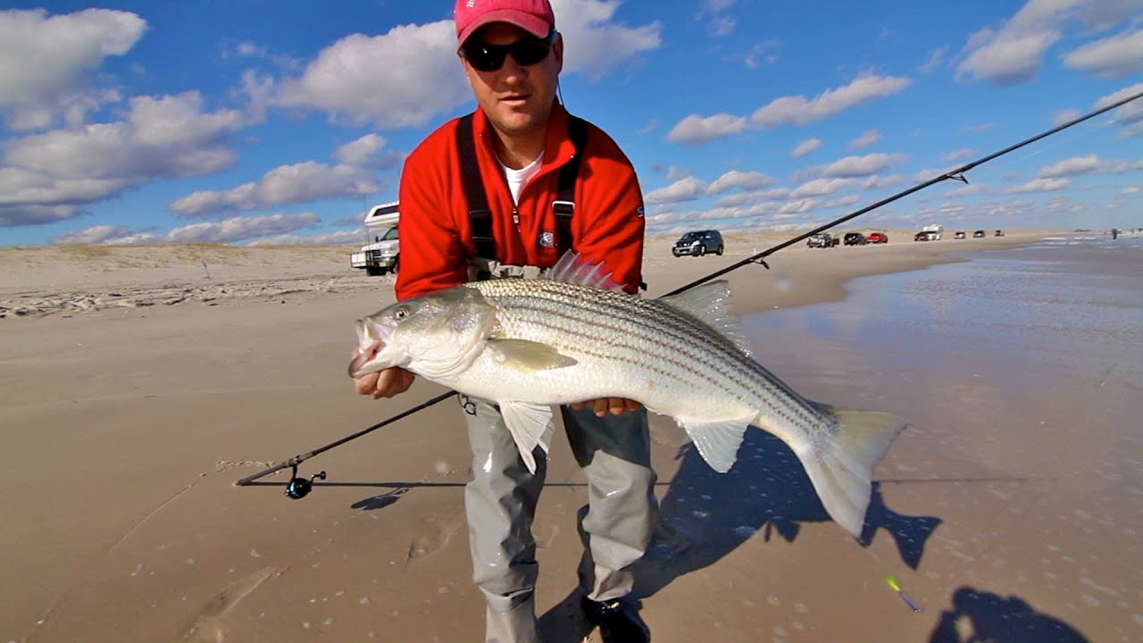 Striped Bass Nj Surf Fishing Youtube