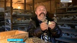 Вести-Хабаровск. Дорогие ветеринарные справки
