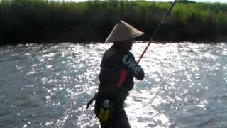 入れ掛かり!連発!20120701福井県日野川漁業協同組合
