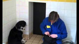 Dogs Trust Salisbury: Nik Nak paddy whack give a dog a home